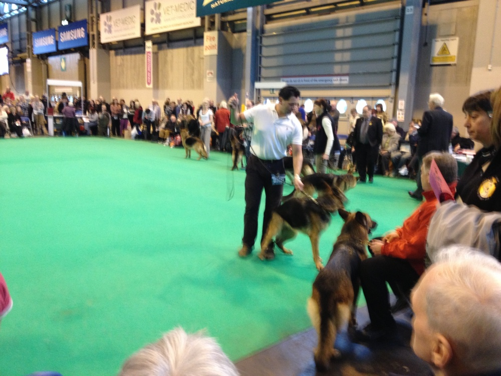 The Crufts - purebreds exposed (3/6)