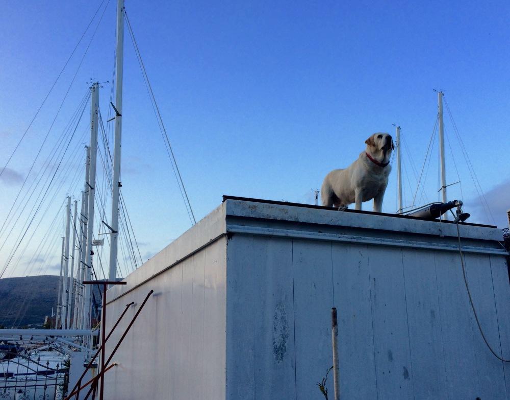 Der Garagen-Labrador (1/3)