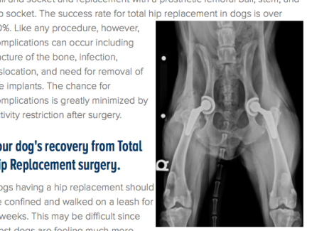 Foto origin:http://www.westvet.net/specialties/surgery/veterinary-orthopedic-surgery/total-hip-replacement