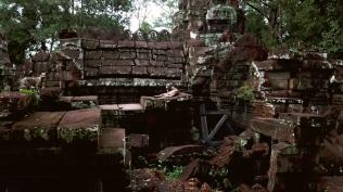 Pariah Dogs atAngkor Wat